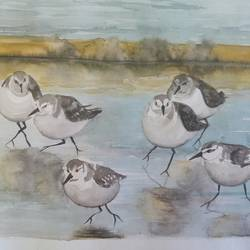 sea birds , 14 x 11 inch, lalit  r,paintings,wildlife paintings,paper,watercolor,14x11inch,GAL0482817527