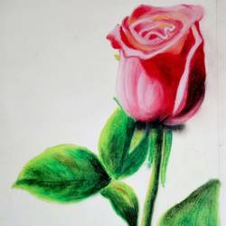 rose painting, 12 x 16 inch, kanchan pandey,paintings,flower paintings,paintings for dining room,paintings for living room,paintings for bedroom,paintings for office,paintings for kids room,paintings for hotel,paintings for kitchen,paintings for school,paintings for hospital,cartridge paper,pastel color,12x16inch,GAL0485717646