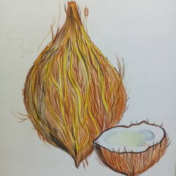 coconut, 17 x 12 inch, riddhinandita riddhinandita,drawings,paintings for living room,paintings for kids room,fine art drawings,paintings for kitchen,cartridge paper,pencil color,17x12inch,GAL0851617810