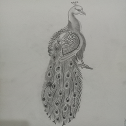 peacock , 17 x 12 inch, riddhinandita riddhinandita,drawings,kids drawings,paintings for dining room,paintings for living room,paintings for office,paintings for kids room,paintings for hotel,drawing paper,pen color,17x12inch,GAL0851617831