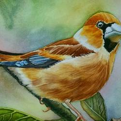 bird on tree, 9 x 12 inch, sampeeta banerjee,paintings,wildlife paintings,realism paintings,animal paintings,realistic paintings,paintings for dining room,paintings for hotel,canson paper,watercolor,9x12inch,GAL0763718045