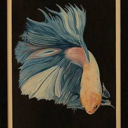 full moon betta blue, 18 x 24 inch, ayan chakrabarti,paintings,wildlife paintings,figurative paintings,modern art paintings,conceptual paintings,nature paintings,photorealism,hardboard,mixed media,oil,18x24inch,GAL0895818223Nature,environment,Beauty,scenery,greenery