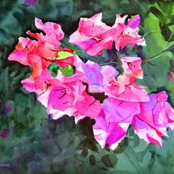 bougainvillea, 21 x 14 inch, ramesh jhawar,paintings,flower paintings,landscape paintings,nature paintings,realism paintings,realistic paintings,paintings for dining room,paintings for living room,paintings for bedroom,paintings for office,paintings for hotel,paintings for dining room,paintings for living room,paintings for bedroom,paintings for office,paintings for hotel,paper,watercolor,21x14inch,GAL0897018234Nature,environment,Beauty,scenery,greenery