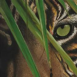 tiger, 16 x 24 inch, sahish prabhakar,drawings,animal paintings,paintings for dining room,photorealism drawings,paintings for dining room,canvas board,oil,16x24inch,GAL0895118245