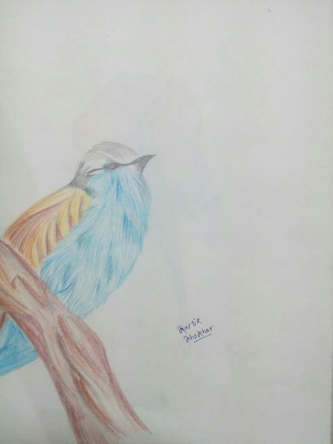 the bird, 12 x 16 inch, kartik khokhar,fine art drawings,paintings for living room,paper,pencil color,12x16inch,GAL07381849