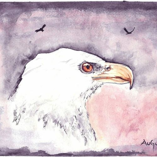 eagle - watercolor , 8 x 12 inch, augur art gallery,paintings,wildlife paintings,art deco paintings,paintings for living room,paintings for office,canson paper,watercolor,8x12inch,GAL0935819028