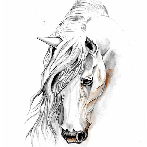 horse - watercolor , 8 x 12 inch, augur art gallery,paintings,animal paintings,horse paintings,paintings for living room,paintings for office,canson paper,watercolor,8x12inch,GAL0935819029