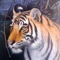 the stare, 24 x 26 inch, ajay  singh peelwa,paintings,wildlife paintings,paintings for living room,paintings for living room,canvas,oil,24x26inch,tiger,GAL0937819067