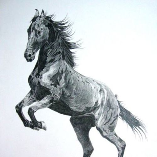 marwari horse, 21 x 24 inch, ajay  singh peelwa,drawings,fine art drawings,paintings for dining room,paintings for living room,paintings for bedroom,paintings for office,paintings for hotel,canson paper,graphite pencil,21x24inch,GAL0937819111