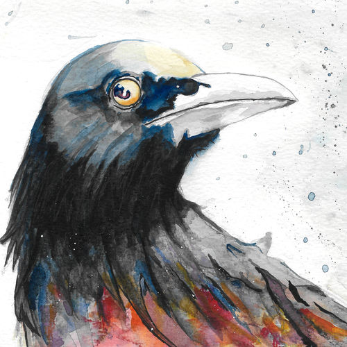 crow in color, 8 x 6 inch, augur art gallery,portrait paintings,animal paintings,paintings for office,paintings for bathroom,paintings for dining room,paintings for living room,paintings for bedroom,canson paper,watercolor,8x6inch,GAL0935819226