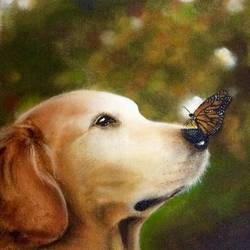butterfly & dog , 12 x 9 inch, simon  fernando,wildlife paintings,paintings for bedroom,dog painting,canvas,acrylic color,12x9inch,GAL07351927