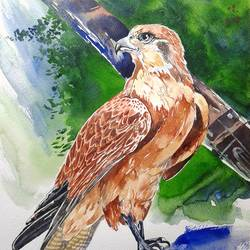 born to fly, 10 x 14 inch, bhavin  mehta ,animal paintings,paintings for dining room,thick paper,watercolor,10x14inch,GAL07591945