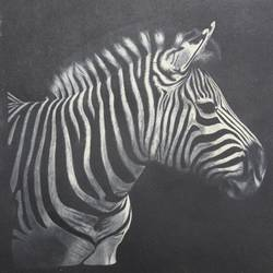 zebra, 18 x 18 inch, vishal gurjar,animal paintings,paintings for office,paintings for kids room,paintings for hotel,paintings for school,paintings for hospital,canvas,oil,18x18inch