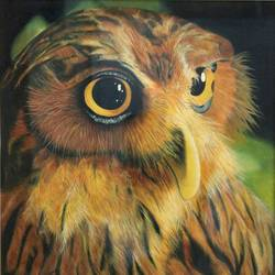 owl colourfil, 14 x 17 inch, vishal gurjar,animal paintings,paintings for office,paintings for kids room,paintings for hotel,paintings for school,paintings for hospital,canvas,acrylic color,oil,14x17inch