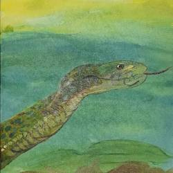 snake, 8 x 10 inch, anitha l,paintings,wildlife paintings,canvas,acrylic color,8x10inch,GAL0968919758