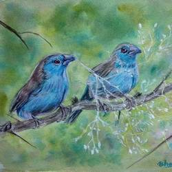 blue waxbill bird - blue colour birds, 12 x 9 inch, bharathi sivakumar,animal paintings,arches paper,mixed media,watercolor,12x9inch,GAL0963019828