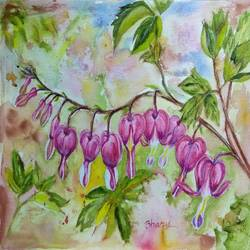 dicentra spectablis flower ( bleeding heart flower), 12 x 9 inch, bharathi sivakumar,paintings,flower paintings,arches paper,pencil color,watercolor,12x9inch,GAL0963019829