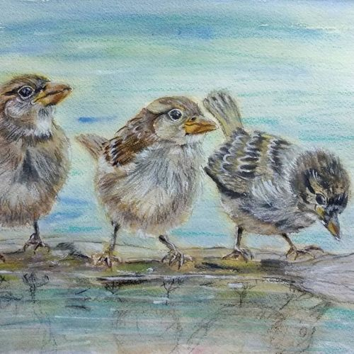 sparrows - drinking water sitting on a log, 14 x 10 inch, bharathi sivakumar,wildlife paintings,nature paintings,animal paintings,arches paper,mixed media,watercolor,14x10inch,GAL0963019831Nature,environment,Beauty,scenery,greenery