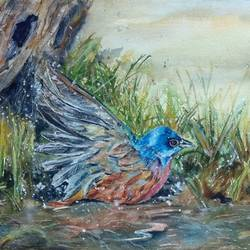 painted bunting taking a dip - bird - colourful - water, 12 x 9 inch, bharathi sivakumar,nature paintings,animal paintings,paintings for dining room,paintings for living room,paintings for bedroom,arches paper,pencil color,watercolor,12x9inch,GAL0963019834Nature,environment,Beauty,scenery,greenery