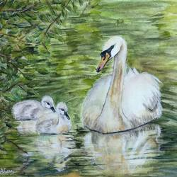 swan and cygnets - water birds - swan swimming with cygnets, 14 x 10 inch, bharathi sivakumar,nature paintings,animal paintings,arches paper,watercolor,14x10inch,GAL0963019835Nature,environment,Beauty,scenery,greenery,swan,water,leaves
