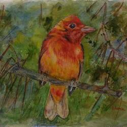 summer tanager bird, 12 x 9 inch, bharathi sivakumar,wildlife paintings,nature paintings,animal paintings,arches paper,pencil color,watercolor,12x9inch,GAL0963019840Nature,environment,Beauty,scenery,greenery
