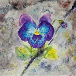 single pansy bloom peeking thru rocky crevice - pansy flower, 10 x 7 inch, bharathi sivakumar,flower paintings,nature paintings,arches paper,pencil color,watercolor,10x7inch,GAL0963019841Nature,environment,Beauty,scenery,greenery