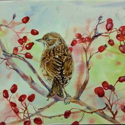 dunnock bird and hawthorn berries, 13 x 10 inch, bharathi sivakumar,wildlife paintings,nature paintings,animal paintings,arches paper,mixed media,watercolor,13x10inch,GAL0963019849Nature,environment,Beauty,scenery,greenery