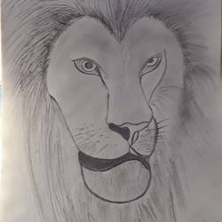 lion, 8 x 12 inch, anitha l,drawings,paintings for living room,paintings for office,paintings for kids room,cartridge paper,charcoal,8x12inch,GAL0968919867