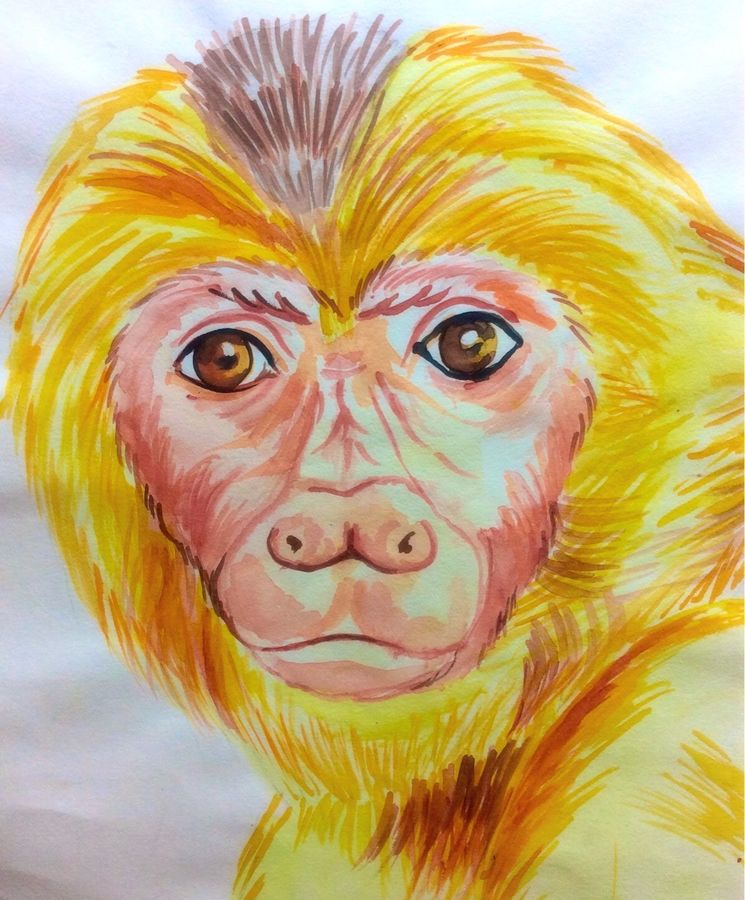 gazing monkey , 9 x 12 inch, aamrit  khanna,animal paintings,paintings for living room,renaissance watercolor paper,watercolor,9x12inch,GAL07102021