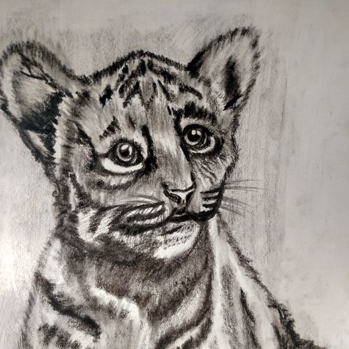 sketch of tiger's cub, 8 x 12 inch, mohd aamir siddiquie,drawings,paintings for dining room,paintings for living room,paintings for bedroom,paintings for office,paintings for bathroom,paintings for kids room,paintings for hotel,paintings for kitchen,paintings for school,paintings for hospital,art deco drawings,figurative drawings,fine art drawings,photorealism drawings,kids drawings,paintings for dining room,paintings for living room,paintings for bedroom,paintings for office,paintings for bathroom,paintings for kids room,paintings for hotel,paintings for kitchen,paintings for school,paintings for hospital,paper,charcoal,8x12inch,GAL0130020439