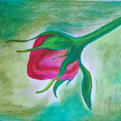 love for tulip, 8 x 11 inch, pranati bhadra,drawings,paintings for dining room,paintings for living room,paintings for bedroom,paintings for office,paintings for kids room,paintings for hotel,paintings for school,drawing paper,pastel color,8x11inch,GAL01039620468