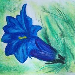 flower love, 8 x 11 inch, pranati bhadra,paintings,flower paintings,paintings for dining room,paintings for living room,paintings for bedroom,paintings for office,paintings for kids room,paintings for hotel,paintings for school,paintings for dining room,paintings for living room,paintings for bedroom,paintings for office,paintings for kids room,paintings for hotel,paintings for school,drawing paper,pastel color,8x11inch,GAL01039620471