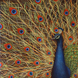 peacock, 30 x 20 inch, goutami mishra,paintings,wildlife paintings,nature paintings,impressionist paintings,photorealism paintings,photorealism,realism paintings,animal paintings,contemporary paintings,realistic paintings,paintings for dining room,paintings for living room,paintings for bedroom,paintings for office,paintings for kids room,paintings for hotel,paintings for school,canvas,oil,30x20inch,GAL046520618Nature,environment,Beauty,scenery,greenery