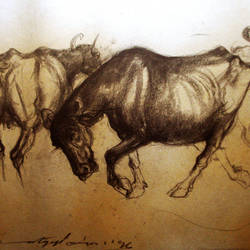 buffalo shed-2, 24 x 20 inch, satyajit chandra chanda,wildlife paintings,paintings for office,animal paintings,paper,charcoal,24x20inch,GAL07502071