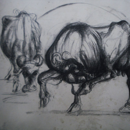 buffalo shed-3, 30 x 20 inch, satyajit chandra chanda,wildlife paintings,paintings for office,animal paintings,paper,charcoal,30x20inch,GAL07502072