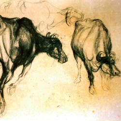 buffalo shed, 20 x 18 inch, satyajit chandra chanda,wildlife paintings,paintings for office,animal paintings,paper,charcoal,20x18inch,GAL07502073