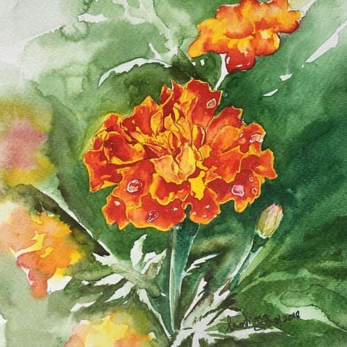 marigold , 7 x 10 inch, pratima kumar,paintings,flower paintings,nature paintings,paintings for dining room,paintings for living room,paintings for bedroom,paintings for office,paintings for kids room,paintings for hotel,paintings for school,paintings for hospital,paintings for dining room,paintings for living room,paintings for bedroom,paintings for office,paintings for kids room,paintings for hotel,paintings for school,paintings for hospital,miniature painting.,canson paper,watercolor,7x10inch,GAL01011920764Nature,environment,Beauty,scenery,greenery
