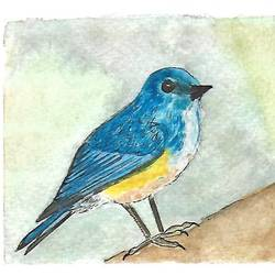 himalayan bluetail, 5 x 4 inch, kadambari pathania,paintings,wildlife paintings,nature paintings,illustration paintings,animal paintings,miniature painting.,paintings for dining room,paintings for living room,paintings for bedroom,paintings for office,paintings for bathroom,paintings for kids room,paintings for hotel,paintings for kitchen,paintings for school,paintings for hospital,paintings for dining room,paintings for living room,paintings for bedroom,paintings for office,paintings for bathroom,paintings for kids room,paintings for hotel,paintings for kitchen,paintings for school,paintings for hospital,brustro watercolor paper,ink color,watercolor,5x4inch,GAL01022720771Nature,environment,Beauty,scenery,greenery