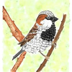 house sparrow, 5 x 5 inch, kadambari pathania,paintings,wildlife paintings,nature paintings,animal paintings,miniature painting.,paintings for dining room,paintings for living room,paintings for bedroom,paintings for office,paintings for bathroom,paintings for kids room,paintings for hotel,paintings for kitchen,paintings for school,paintings for hospital,brustro watercolor paper,watercolor,5x5inch,GAL01022720774Nature,environment,Beauty,scenery,greenery