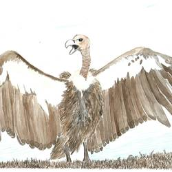 white rumped vulture, 12 x 9 inch, kadambari pathania,paintings,wildlife paintings,nature paintings,animal paintings,paintings for dining room,paintings for living room,paintings for bedroom,paintings for office,paintings for bathroom,paintings for kids room,paintings for hotel,paintings for kitchen,paintings for school,paintings for hospital,brustro watercolor paper,watercolor,12x9inch,GAL01022720779Nature,environment,Beauty,scenery,greenery