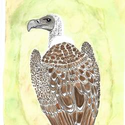 indian vulture, 9 x 12 inch, kadambari pathania,paintings,wildlife paintings,nature paintings,animal paintings,paintings for dining room,paintings for living room,paintings for bedroom,paintings for office,paintings for bathroom,paintings for kids room,paintings for hotel,paintings for kitchen,paintings for school,paintings for hospital,brustro watercolor paper,watercolor,9x12inch,GAL01022720781Nature,environment,Beauty,scenery,greenery