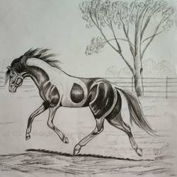 horse, 13 x 11 inch, s rajitha,drawings,portrait drawings,drawing paper,charcoal,13x11inch,GAL01085320947
