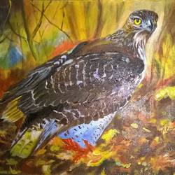 eagle, 12 x 17 inch, prabha  panth,paintings,wildlife paintings,paintings for living room,canvas,acrylic color,12x17inch,GAL0390721085