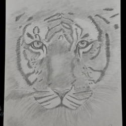 look into my eyes..i want to roar, 8 x 12 inch, puneet bangera,drawings,realism drawings,paper,graphite pencil,8x12inch,GAL01087721095