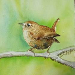bird, 8 x 12 inch, sudha baregar,paintings,nature paintings,realistic paintings,paintings for living room,paintings for bedroom,paintings for office,paintings for hotel,handmade paper,watercolor,8x12inch,GAL01111121245Nature,environment,Beauty,scenery,greenery