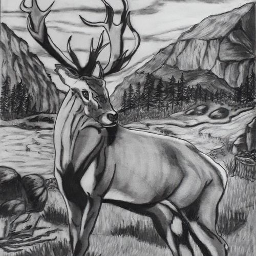the stag, 14 x 22 inch, pranav bhatnagar,drawings,figurative drawings,paintings for dining room,paintings for living room,paintings for bedroom,cartridge paper,charcoal,14x22inch,GAL0280221260
