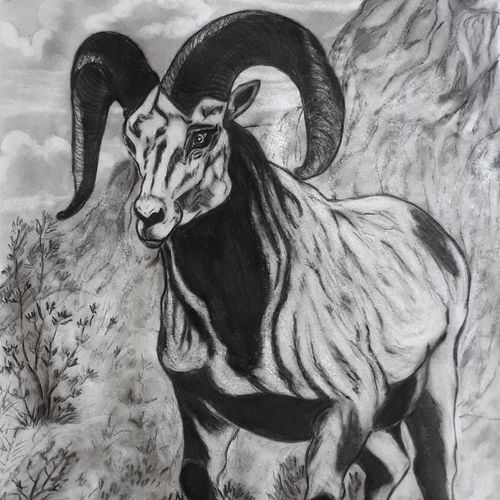 mountain ram, 13 x 22 inch, pranav bhatnagar,drawings,figurative drawings,paintings for dining room,paintings for living room,paintings for bedroom,cartridge paper,charcoal,13x22inch,GAL0280221261