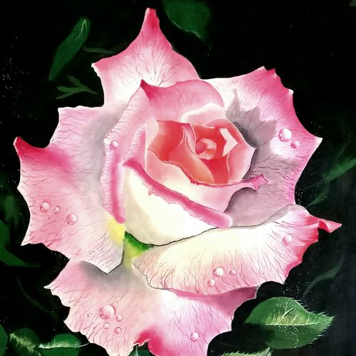 rose glamour , 17 x 26 inch, md moin ,paintings,flower paintings,canvas,oil,17x26inch,GAL01096021421