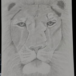the king of a jungle, 8 x 12 inch, puneet bangera,drawings,realism drawings,paper,graphite pencil,8x12inch,GAL01087721448