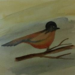 red robin, 7 x 9 inch, arpitha m d,wildlife paintings,paintings for living room,paintings for office,fabriano sheet,watercolor,7x9inch,GAL08102175